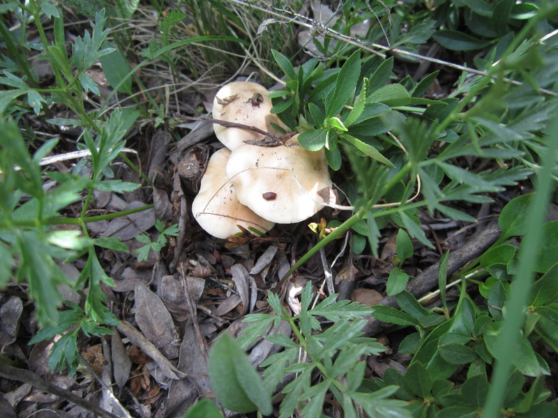 Treeline mushrooms
