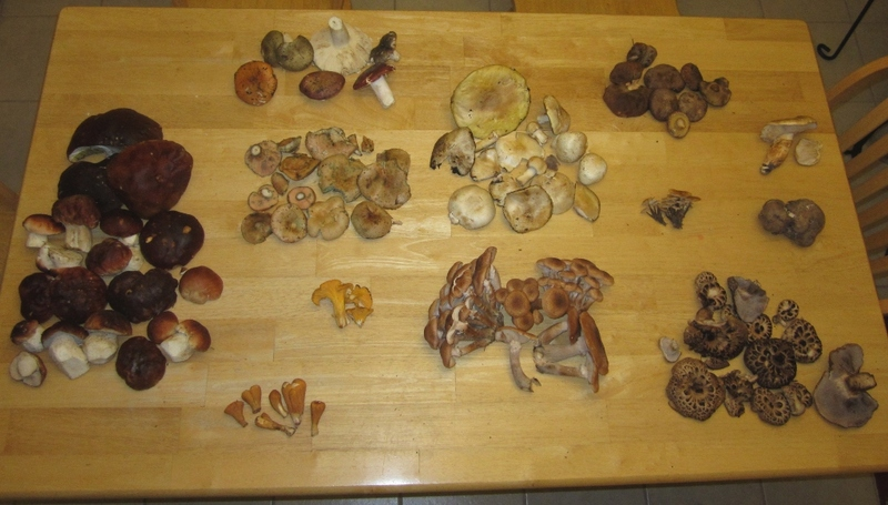 Todays Mushrooms